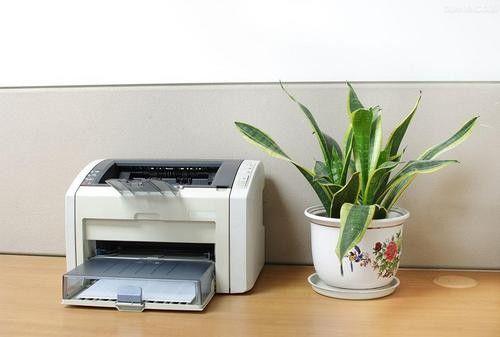 家装旺季有误区 植物去甲醛也有禁忌!