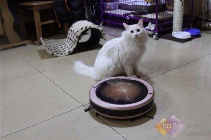 """不过买了扫地机器人的""""猫奴""""们应该都知道"""