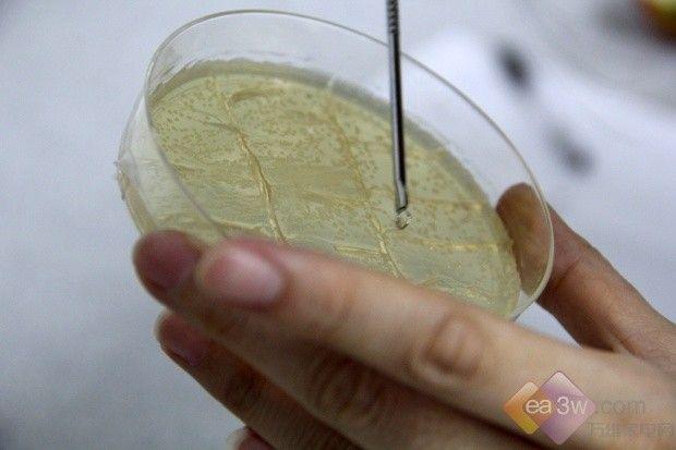 真相揭秘 杀菌的冰箱真的能防止食材腐烂?