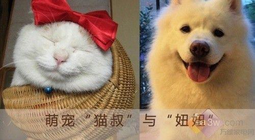 科沃斯地宝——宠物毛发清理专家