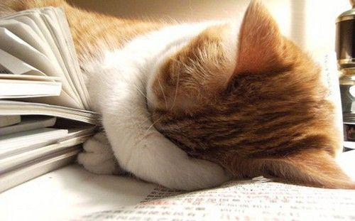 猫咪犯困的可爱图片