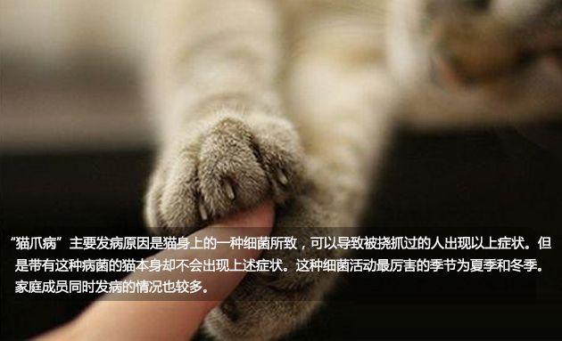生活大爆炸:抚摸猫猫或有致死风险?