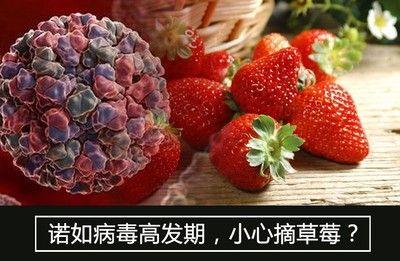 生活大爆炸:诺如病毒高发期,小心摘草莓?