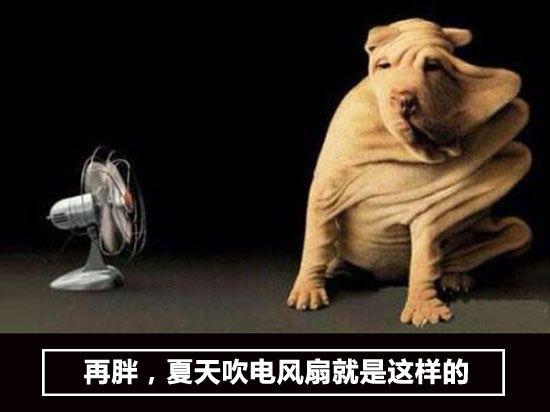 生活大爆炸:再胖,夏天吹电风扇就是这样的