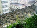 空调里的动物园2:国家二类保护动物麻雀住进了空调洞