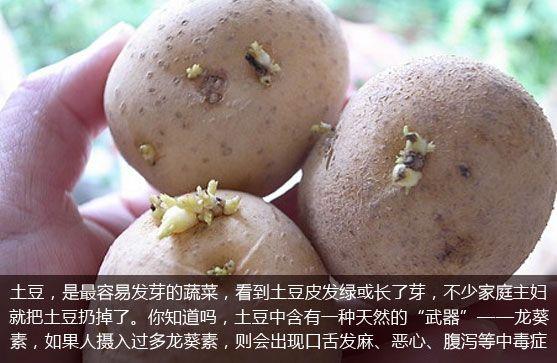 生活大爆炸:哪些食物一旦发芽,就不能吃?