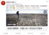 丹麦生蚝泛滥成灾 中国人民真能任性吃?