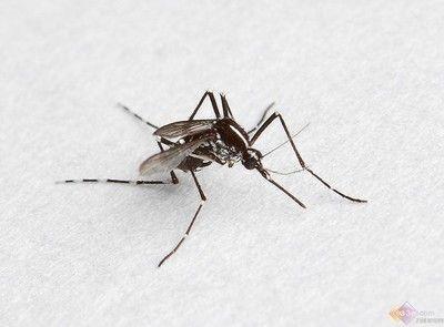 夏天生活常备小妙招,原来还可以这样驱蚊