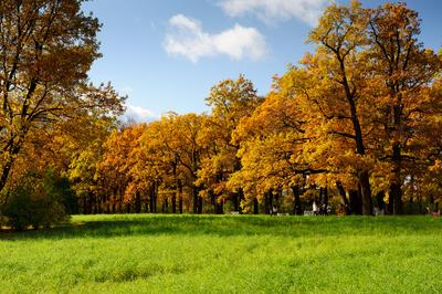 壁纸 风景 森林 桌面 400_266