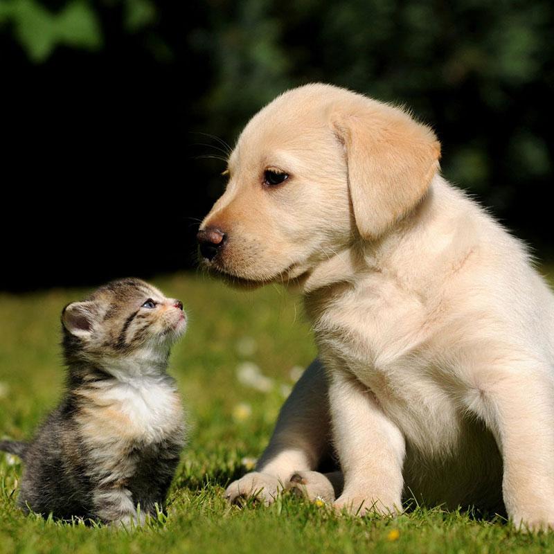 然而养过猫狗的人都知道,小猫小狗的排泄物是很臭的,尤其是它们的尿液,即使每天清理,味道还是很大。即使如此,还是有很多人抵挡不住小猫小狗那萌萌哒的形象,那么爱养小动物的人士既想拥有一只可爱的小猫小狗,又想解决它气味大的问题,那该怎么办? 其实想解决这个问题很简单,夏普空气净化器FP-CH70-N可以轻松帮你解决。 夏普空气净化器FP-CH70-N一体成型的曲面造型,优雅灵动,与小猫小狗可爱的造型相映成趣。该机的曲面触控智能灵动,一键可变化运动模式,让净化更人性、更贴心。此外,它还有着涟漪呼吸灯,似水波般灵