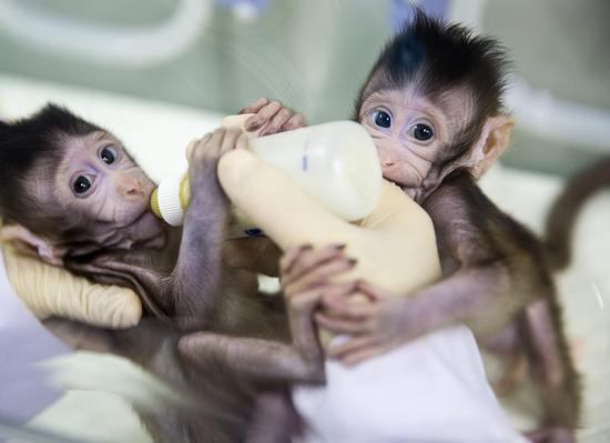 科技早闻:百变猴毛成现实,两只克隆猴在中国诞生