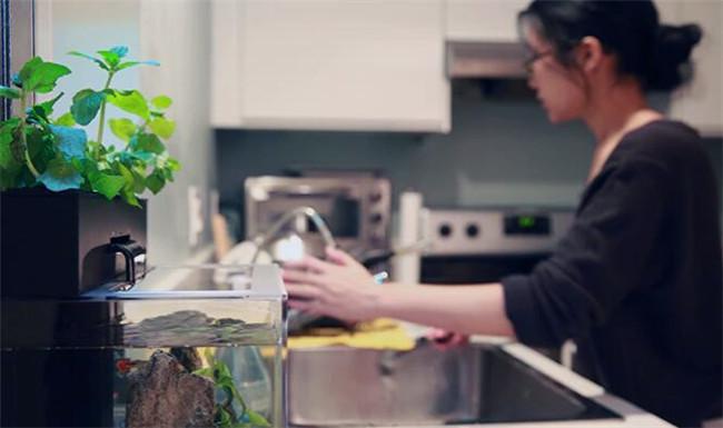 创意产品!花盆与鱼缸的完美结合体,养鱼者的福利