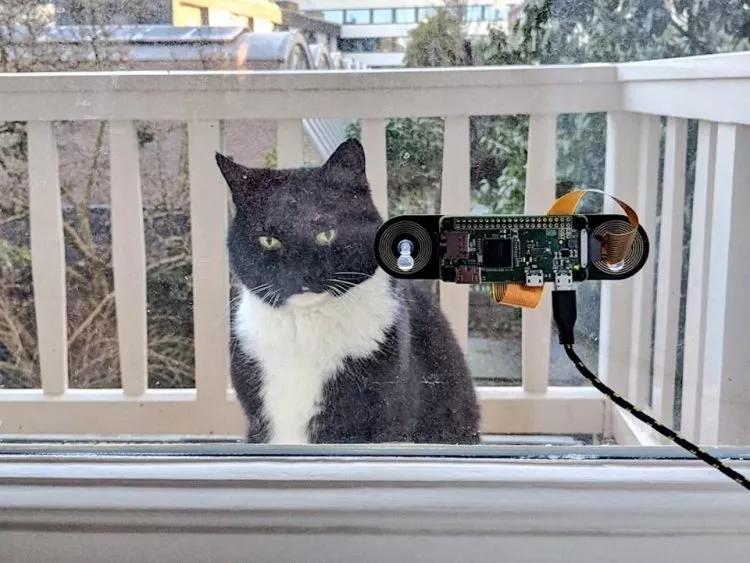 吸猫者的福音,再也不用担心主子进不了门了