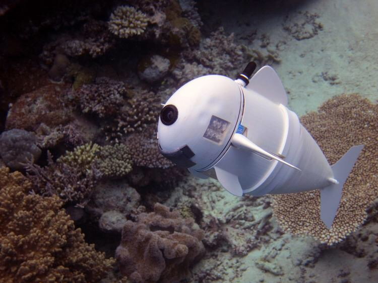 鱼群傻傻把它当同类?机器鱼未来玩法大揭秘