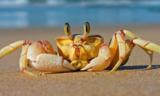 忍着肉疼买的螃蟹,你竟然不会吃?!
