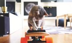 猫星人也有专用电动滑板?竟然还能边吃边玩
