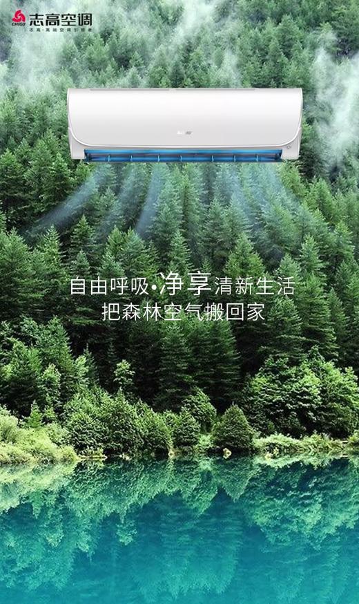 志高智能王203款:让你在家就如置身丛林般舒畅呼吸