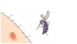 黑夜里的捕蚊专家,灭蚊灯哪个牌子好
