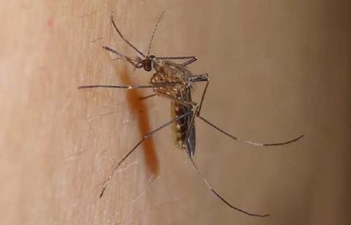 科学环保消灭蚊子,灭蚊灯真的有用吗