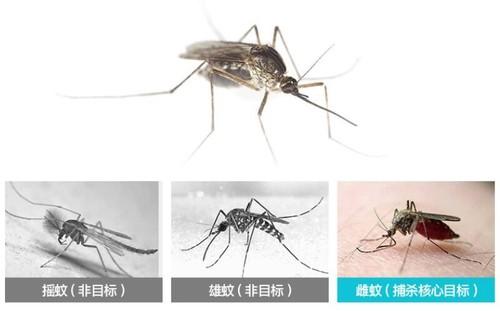 杜绝错误灭蚊手法,灭蚊灯有效果吗?