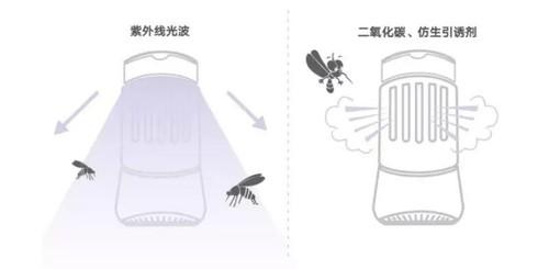 灭蚊灯真的有用吗?它的致癌风险你不能不看!