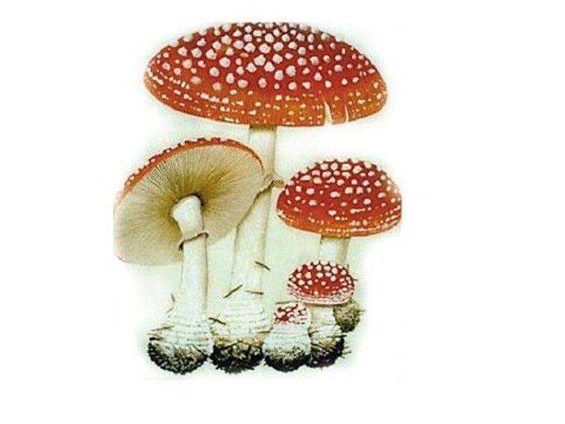 洗手七步骤蘑菇造型