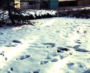 雪天安全出行谨记六要素
